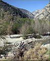 Lytle Creek, Mt Baldy 3-16-13f (8568646631).jpg