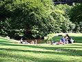 Müngstener Brückenpark 01 ies.jpg