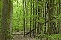 MOs810, WG 2014 20, OChK Las Miejski (Buczyna Helenopol natural reserved) (4).JPG