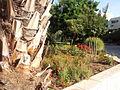 MS Arecaceae 1 8 20120911 163236.jpg