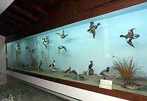 Natural History Museum (Thessaloniki) - Image: Macedonian Museums 65 Fysikhs Istorias Thessalonikhs 284