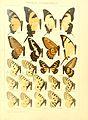 Macrolepidoptera15seit 0043.jpg