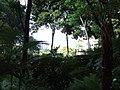 Madeira - Monte - Jardim Tropico (2093403148).jpg