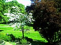 Mai - Botanischer Garten Freiburg - 2016 - panoramio (7).jpg