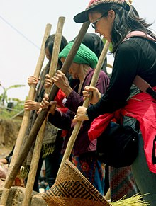 [COC Regional: Kebudayaan]Panen, Penduduk Sukabumi Berterima kasih Pada Dewi Sri/Padi