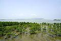 Mangrove of Rhizophoraceaes.jpg