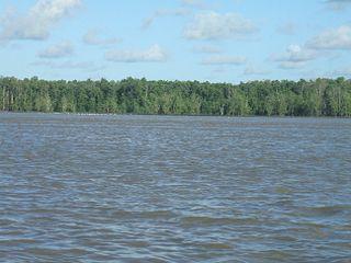 Amapá mangroves