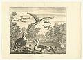 Mantelmeeuwen en eenden in een vogelvijver.jpeg