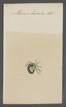 Marica - Print - Iconographia Zoologica - Special Collections University of Amsterdam - UBAINV0274 070 05 0021.tif