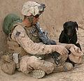 Marines, Afghans patrol Marjah DVIDS253703.jpg