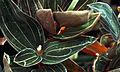 Marjorie McNeely Conservatory (2256102147).jpg