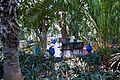 Marrakesh, Majorelle Garden (5365236118).jpg