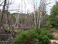 Marsh Along Wakely Mountain Trail.jpg