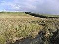 Marsh ground - geograph.org.uk - 356170.jpg