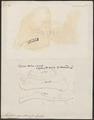 Mastodon giganteum - 1700-1880 - Print - Iconographia Zoologica - Special Collections University of Amsterdam - UBA01 IZ22000023.tif
