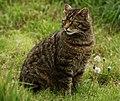 McTavish (British Wildlife Centre).jpg