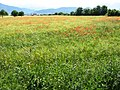 Meadow in the pré Alps.JPG