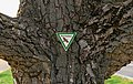 Meckenheim (Pfalz) Böhler Straße 010 2020 04 09.jpg