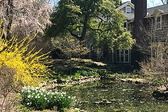 Bamboo Brook Outdoor Education Center - Daffodils, bushes and trees in bloom by the Upper Water pool in 2018
