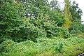 Mezinovskiy, Vladimirskaya oblast', Russia, 601525 - panoramio (81).jpg