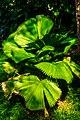 Miami - Fairchild Tropical Botanic Garden - (12260305106).jpg
