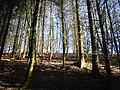 Millington Woods - panoramio (1).jpg