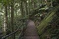 Minnamurra Rainforest - panoramio (15).jpg
