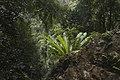 Minnamurra Rainforest - panoramio (29).jpg