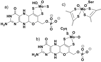 Transition metal oxo complex - Three structural families of molybdenum cofactors: a) xanthine oxidase, b) sulfite oxidase, and c) (DMSO) reductase.  The DMSO reductase features two molybdopterin ligands attached to molybdenum.  They are omitted from the figure for simplicity.  The rest of the heterocycle is similar to what is shown for the other two cofactors.