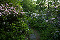 Mountain-spring-wildflowers-walking-trail - West Virginia - ForestWander.jpg