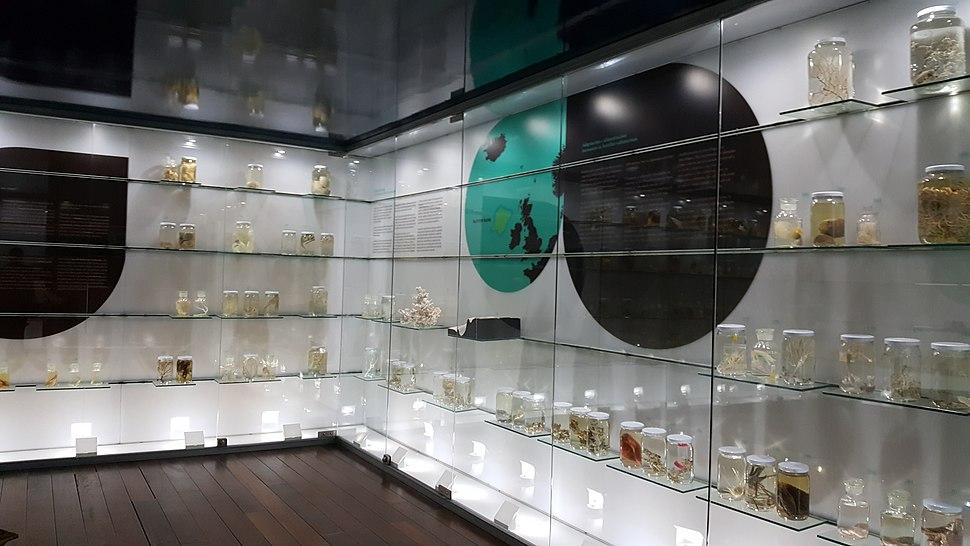 Museo do mar de Galicia - sala de frascos con especies mariñas