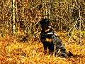 My Lovely Dog - panoramio.jpg