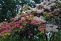 My Public Lands Roadtrip- O.H. Hinsdale Rhododendron Garden in Oregon (18910470099).jpg