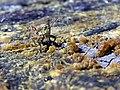 NZ grasshopper.jpg