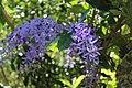 Naples Botanical Garden (231184875).jpeg