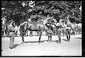 Narcyz Witczak-Witaczyński - Przegląd koni w 1 Pułku Szwoleżerów (107-251-1).jpg