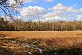 Nationaal Park Drents-Friese Wold. Locatie Dieverzand 008.JPG