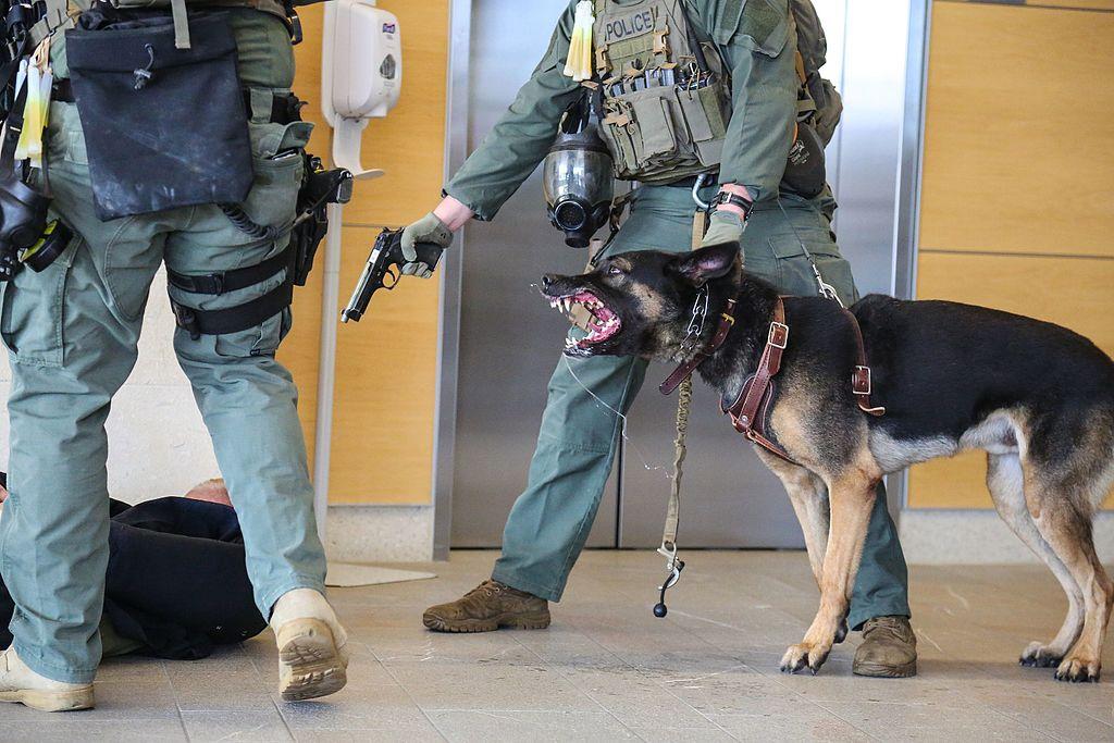 Capital Region Dog Adoption