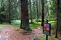 National nature reserve Kladské rašeliny in summer 2012 (13).JPG