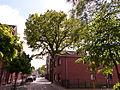 Naturdenkmal 3-3 , Eiche in der Schulstraße, Bilb 3.JPG