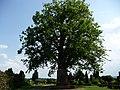 Naturdenkmal Linde Neuenkirchen Melle -Vor der Linde auf dem Friedhof- Datei 1.jpg