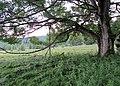 Nature reserve Prameniště (18).jpg