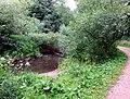 Naturschutzgebiet Diekbek Hamburg-Duvenstedt (5f).jpg