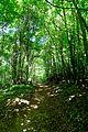 Naturschutzgebiet Granitz - Forst Werder (4).jpg