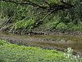 Naturschutzgebiet Heuckenlock 21.05.2014 Phase 79.JPG