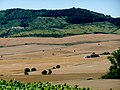 Navarre Paysage près d'Alzuza.jpg