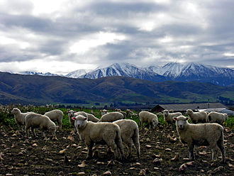 Sheffield, New Zealand - Rural scene near Sheffield, with the Southern Alps in the background