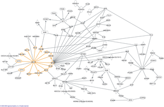 Interactome - Part of the DISC1 interactome with genes represented by text in boxes and interactions noted by lines between the genes. From Hennah and Porteous, 2009.