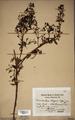 Neuchatel Herbarium Types NEU000113025.tif