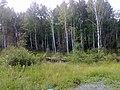 Nevyanskiy r-n, Sverdlovskaya oblast', Russia - panoramio (14).jpg